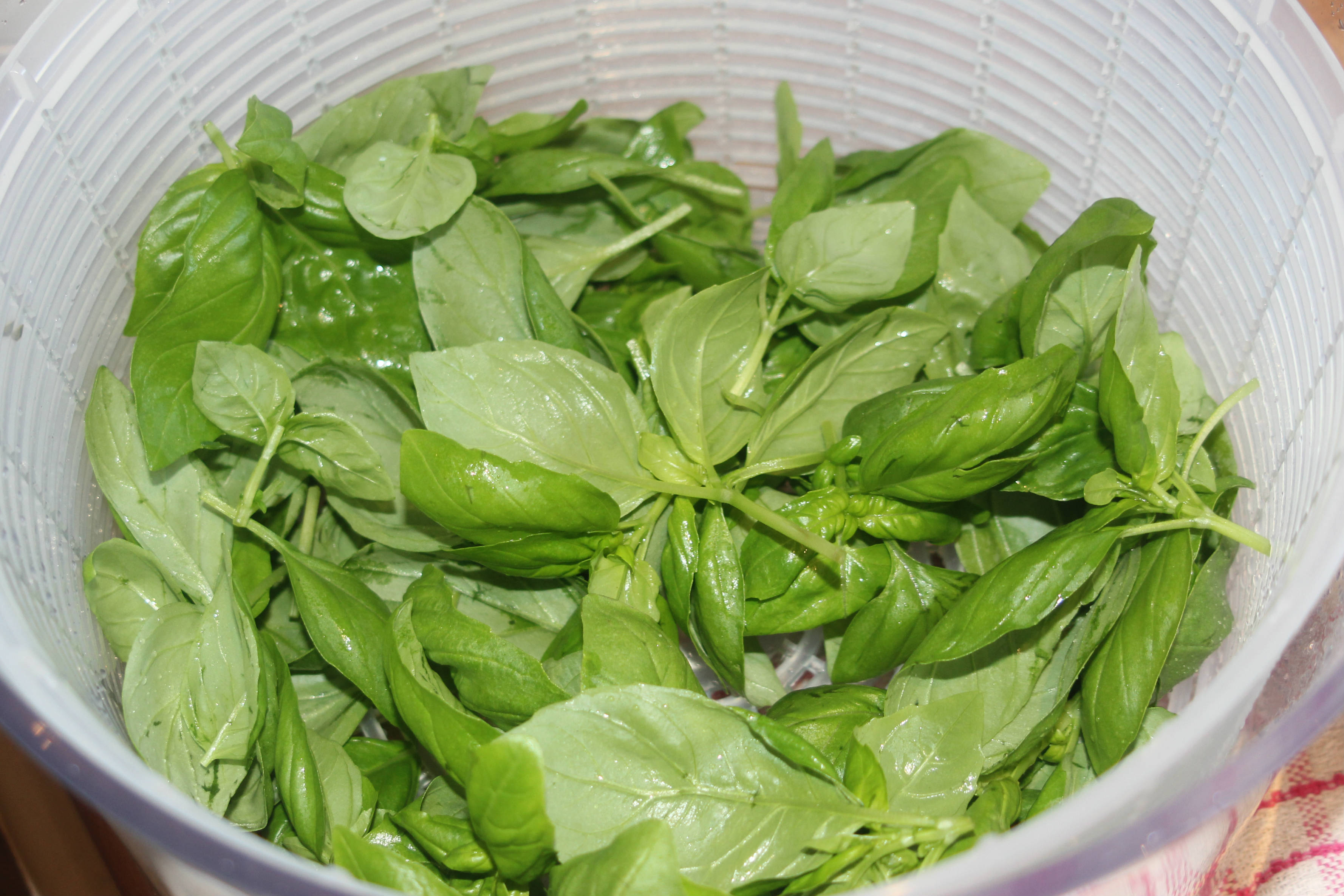 Macadamia Pesto 2